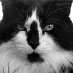 Best Pictures of Cats by Springfield, Illinois area Photographer, Deverie Rudd