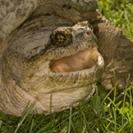 Images of Reptiles and Amphibians by Carlinville Illinois Area Photographer, Deverie Rudd
